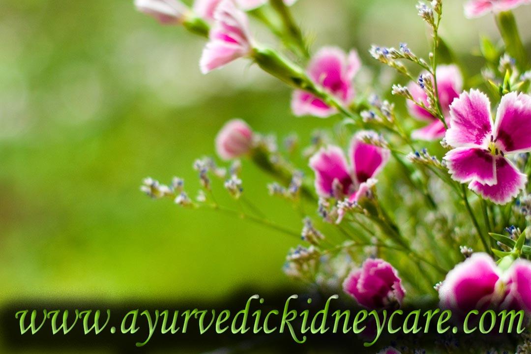 Kidney Failure Treatment Arkansas