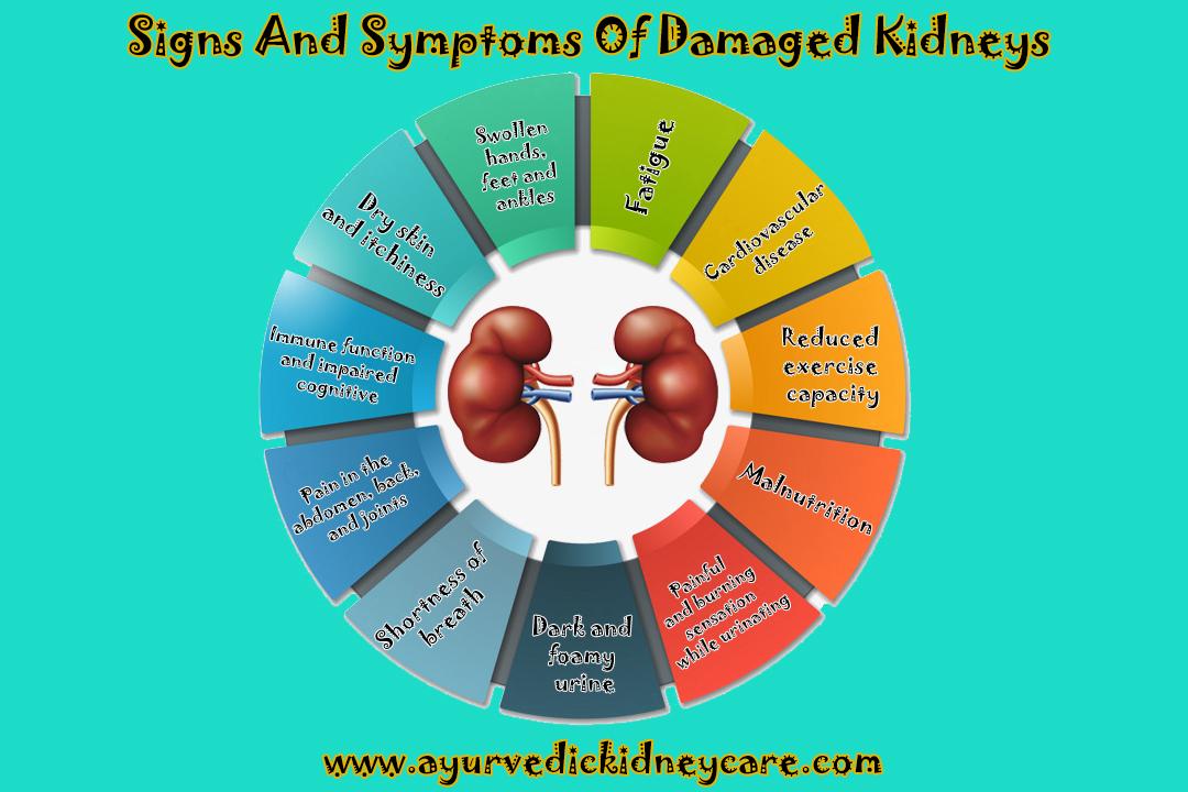 Kidney Function Improvement Foods