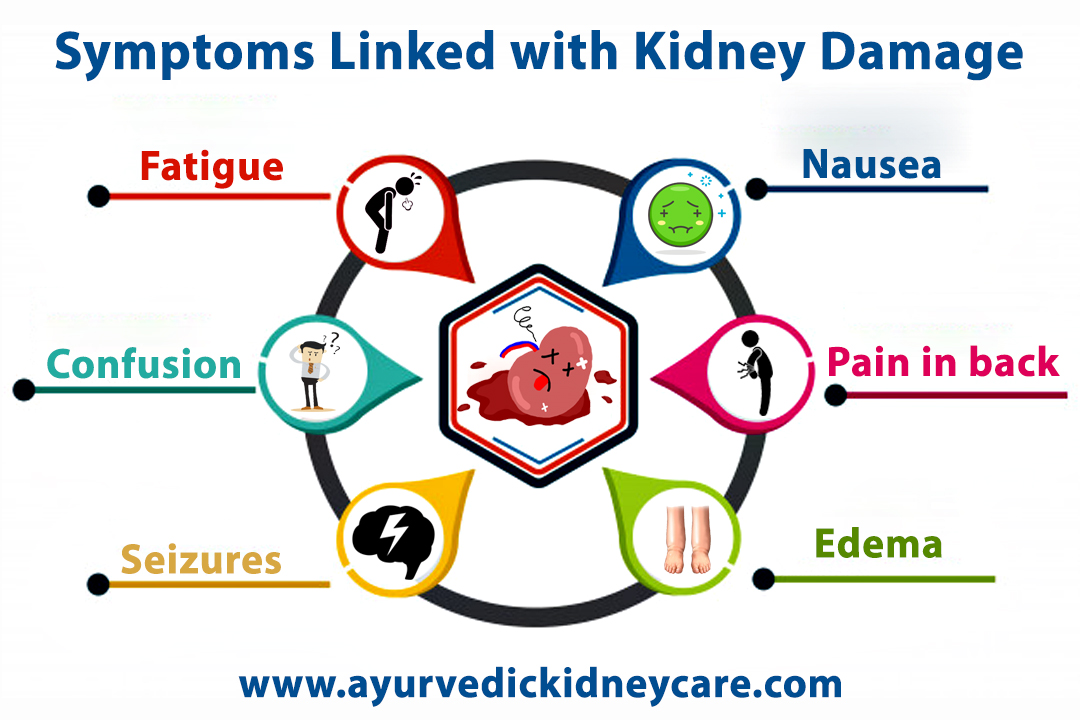 Ayurvedic medicines for kidney damage