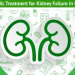 ayurvedic treatment for kidney failure in Chennai